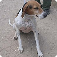 Adopt A Pet :: Martina - Seguin, TX