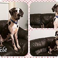 Adopt A Pet :: Sparkle - DOVER, OH
