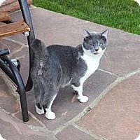 Adopt A Pet :: Mr. Stubbs - Ogallala, NE