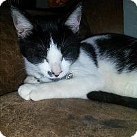Adopt A Pet :: Smudge - Homewood, AL