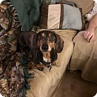 Adopt A Pet :: Winston - Marcellus, MI