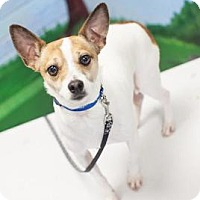 Adopt A Pet :: Sparky - Bellbrook, OH