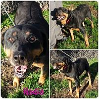 Adopt A Pet :: Hadia - Sacramento, CA