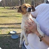 Adopt A Pet :: Mandy - Laingsburg, MI