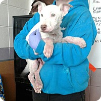 Adopt A Pet :: Booth - Ozone Park, NY