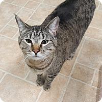 Adopt A Pet :: Zelda - Cody, WY