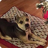 Adopt A Pet :: Nick - Auburn, WA