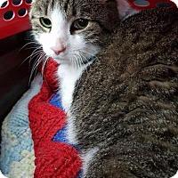 Adopt A Pet :: Frankie - Freeport, NY