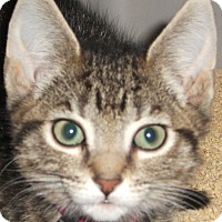 Adopt A Pet :: Ariel and Pandora - Colmar, PA