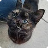 Adopt A Pet :: Izzy - Visalia, CA