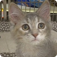 Adopt A Pet :: AGNES - Diamond Bar, CA