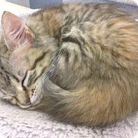 Adopt A Pet :: Maureen - Lake Charles, LA