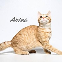 Adopt A Pet :: Aries - Laconia, IN