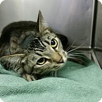 Adopt A Pet :: Michelle - Modesto, CA