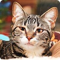 Adopt A Pet :: Carol - Lincoln, CA