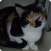 Adopt A Pet :: Reese - Hamburg, NY