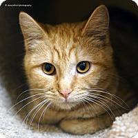 Adopt A Pet :: Clementine - Tucson, AZ