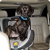Adopt A Pet :: Carmen pending adoption - Manchester, CT