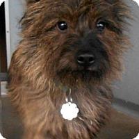 Adopt A Pet :: Stewie - Oskaloosa, IA