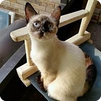 Adopt A Pet :: Pepper - Crestview, FL