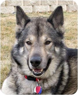 Dogs That Look Like German Shepherds But Aren T German Shepherds