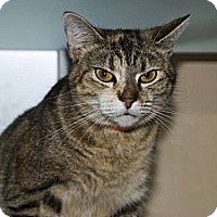 Adopt A Pet :: Carly - New Port Richey, FL