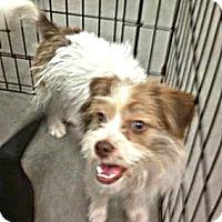 Adopt A Pet :: Jack - Silsbee, TX