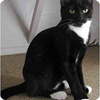 Adopt A Pet :: Paulie - Davis, CA