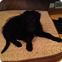 Adopt A Pet :: Keenan - Denver, CO