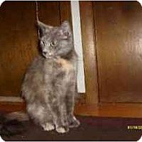 Adopt A Pet :: Mona - Milwaukee, WI