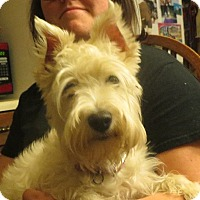 Adopt A Pet :: Molly - Greenville, RI