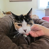 Adopt A Pet :: Bridget - Oakland, OR