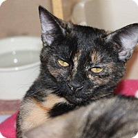Adopt A Pet :: Millie @ Roswell Petsmart - McDonough, GA