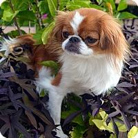 Adopt A Pet :: Mimmie - Bridgeton, MO
