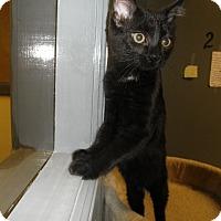Adopt A Pet :: Aidee - Milwaukee, WI