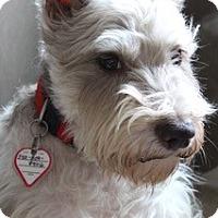 Adopt A Pet :: Buddy - Laurel, MD