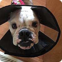 Adopt A Pet :: Butters - Odessa, FL