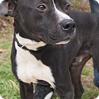 Adopt A Pet :: Buddy - Jackson, TN
