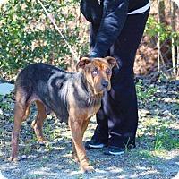 Adopt A Pet :: Bonita - Whiteville, NC
