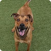Terrier (Unknown Type, Medium) Mix Dog for adoption in Farmington, New Mexico - Mikey