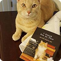 Adopt A Pet :: Scotch - Nashville, TN