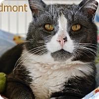 Adopt A Pet :: Piedmont - Polson, MT