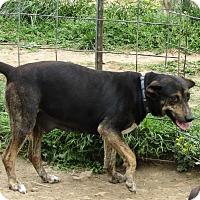Adopt A Pet :: Dutchess - Mississauga, ON