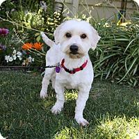 Adopt A Pet :: REMIE - Newport Beach, CA