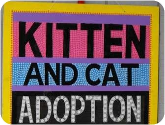Domestic Shorthair Kitten for adoption in Byron Center, Michigan - Open Adoption Days!
