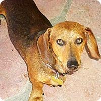 Adopt A Pet :: O'Henry - San Jose, CA