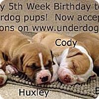 Adopt A Pet :: Cody - Framingham, MA