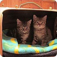 Adopt A Pet :: Roly & Poly - Acme, PA