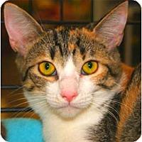 Adopt A Pet :: Tess - San Ramon, CA