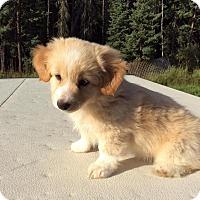 Adopt A Pet :: Kip - Saskatoon, SK